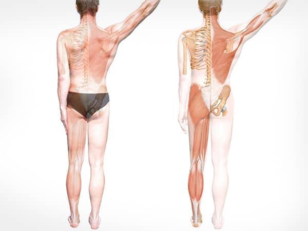 schmerzen-bewegungssystem